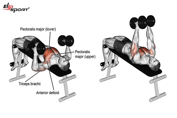 các bài tập fitness cho nam hiệu quả