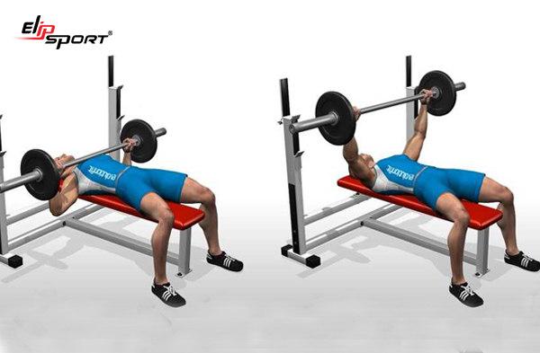 Các bài tập gym cơ bản cho nam