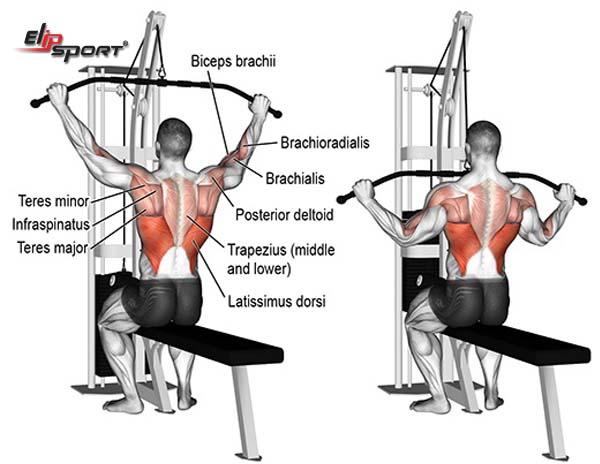 bài tập lưng gym