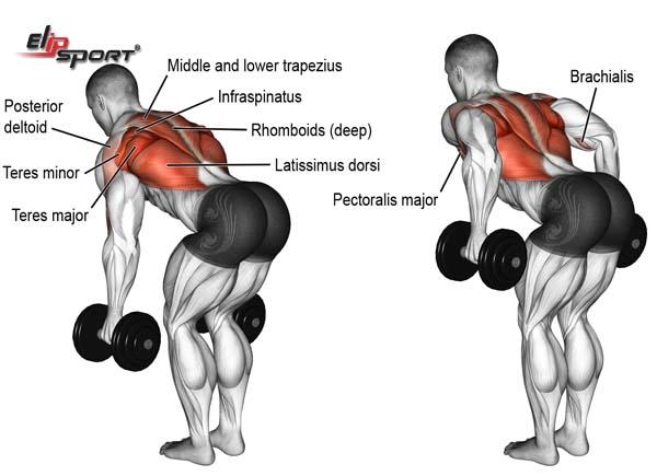 Cách tập cơ lưng dưới với tạ đơn dễ thực hiện
