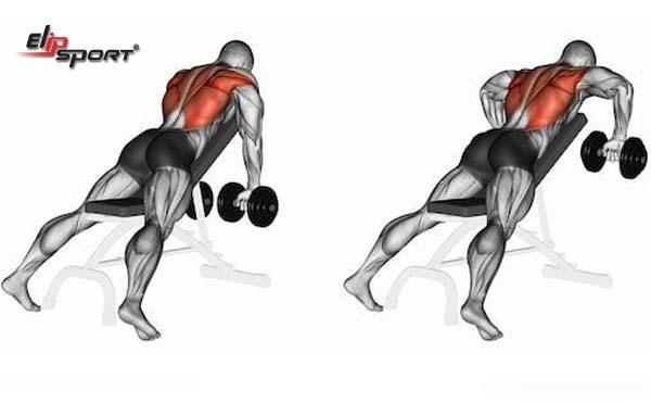tập cơ lưng với tạ đơn