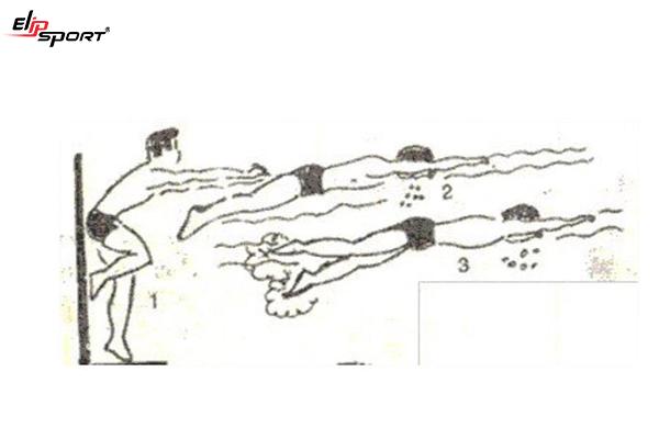 hướng dẫn bơi sải