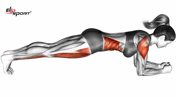 Tập plank có to bắp tay không