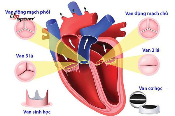 hở van tim nhẹ