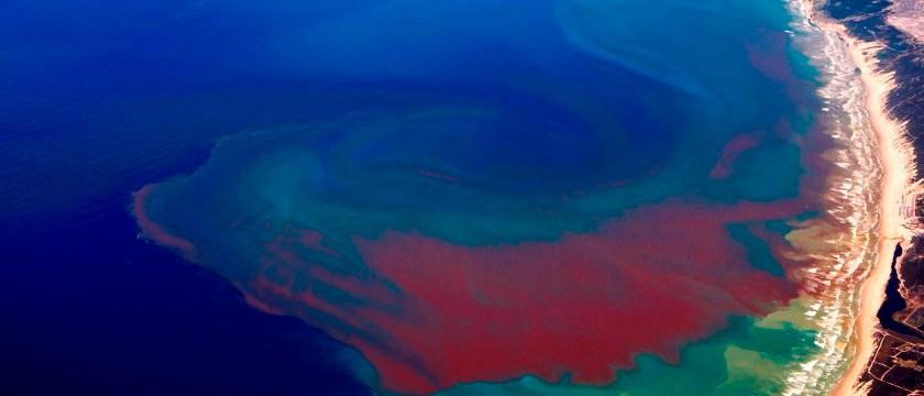 thủy triều đỏ