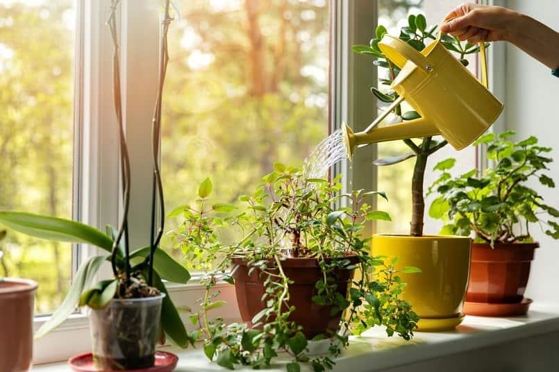 trồng cây trong nhà