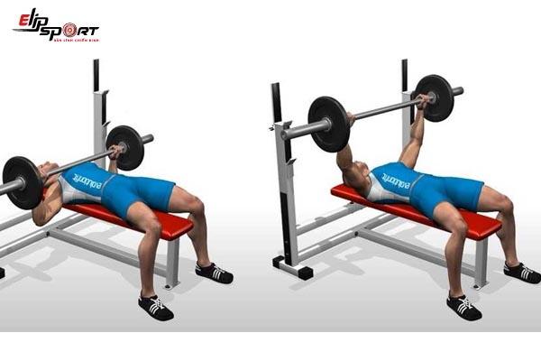 lịch tập gym cho người mới
