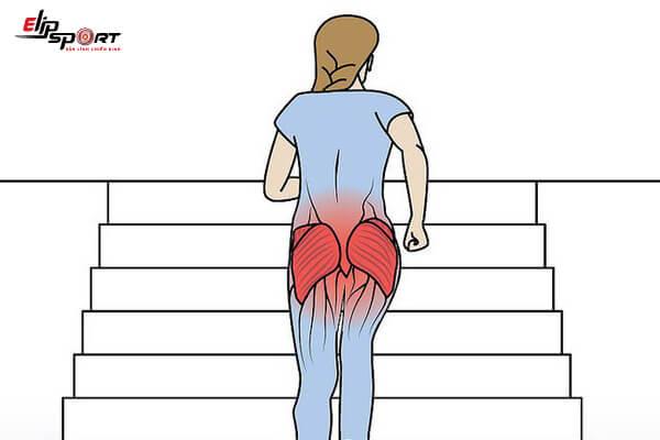 đau cơ mông