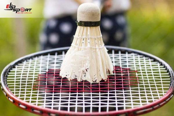 vợt cầu lông forza