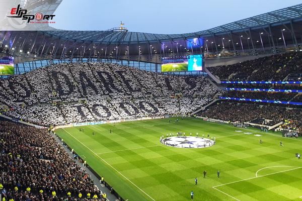 cỏ ở sân bóng đá quốc tế
