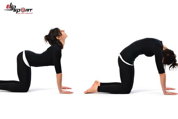 những bài tập chữa đau lưng