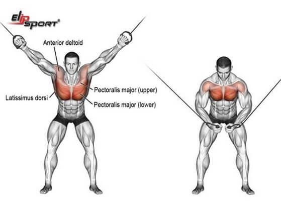 Tổng hợp những bài tập ngực dưới hiệu quả cho nam