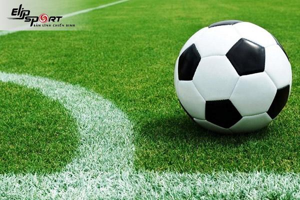 Hạt giống cỏ sân bóng đá