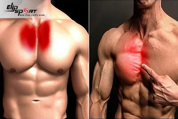 tập cơ ngực trên