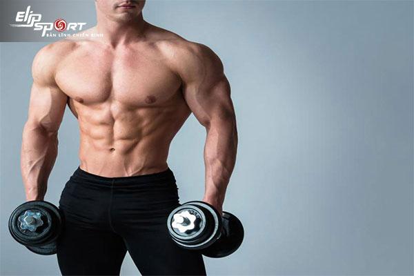 cơ bắp phát triển như thế nào
