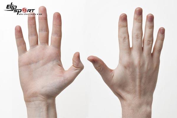 thứ tự các đốt ngón tay