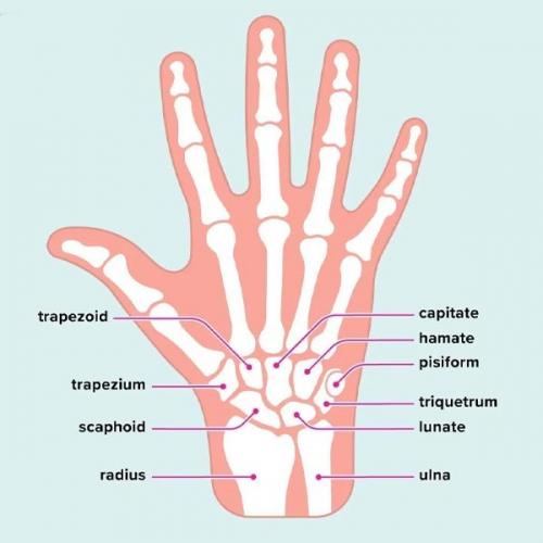Tên gọi của từng ngón tay và thứ tự các đốt ngón tay