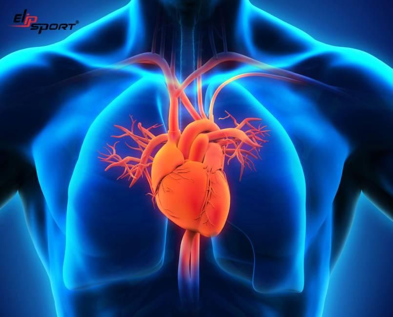 Bệnh hở van tim 2 lá là gì? Hở van tim 2 lá có nguy hiểm không?