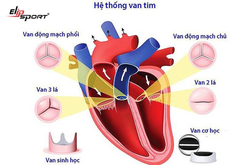 Triệu chứng hở van tim